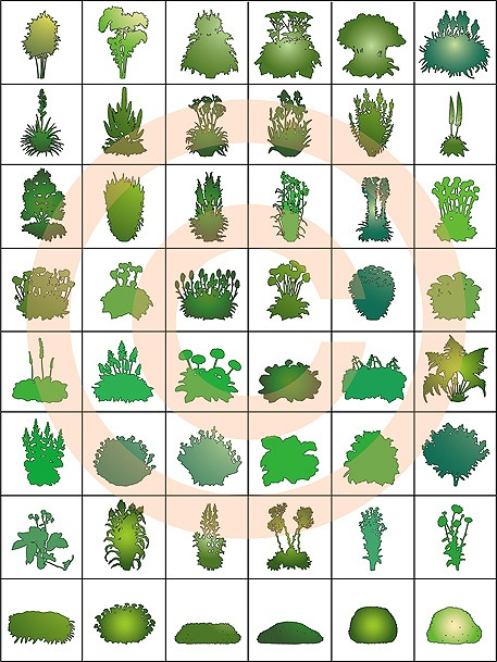 Elevation And Plan Of Trees : Artisans gardens landscape design symbols swatches